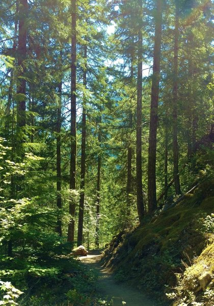 The Thunder Knob Trail wanders through the fir forests of the North Cascades on a summer day.