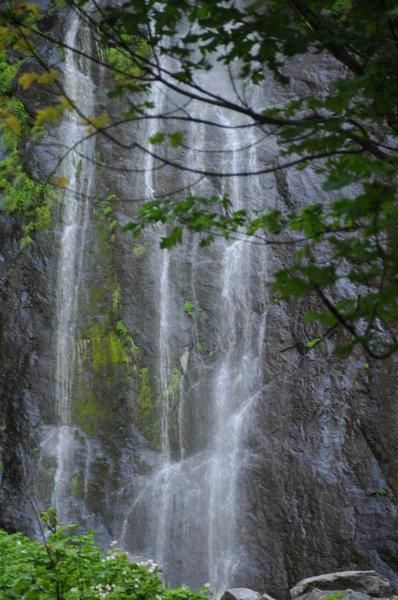 Snoquera Falls through the brush