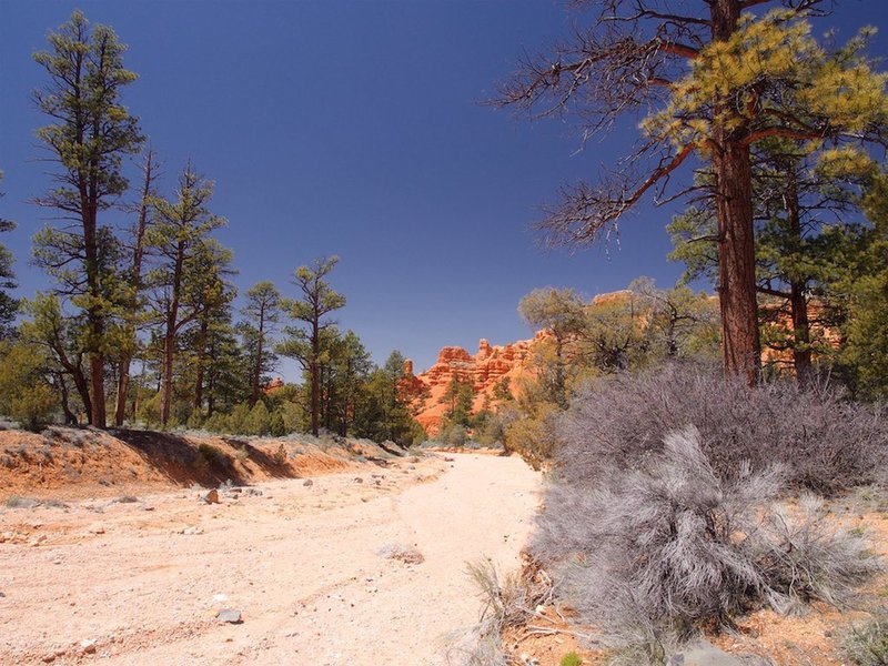 Near the Bryce Canyon to Red Canyon Bike Path.