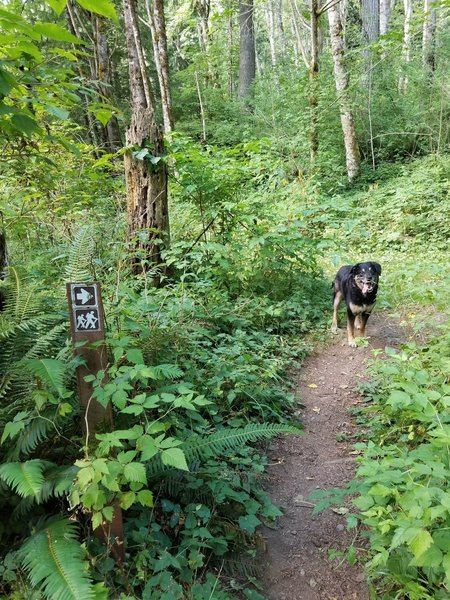 The trail is well signed and is dog friendly