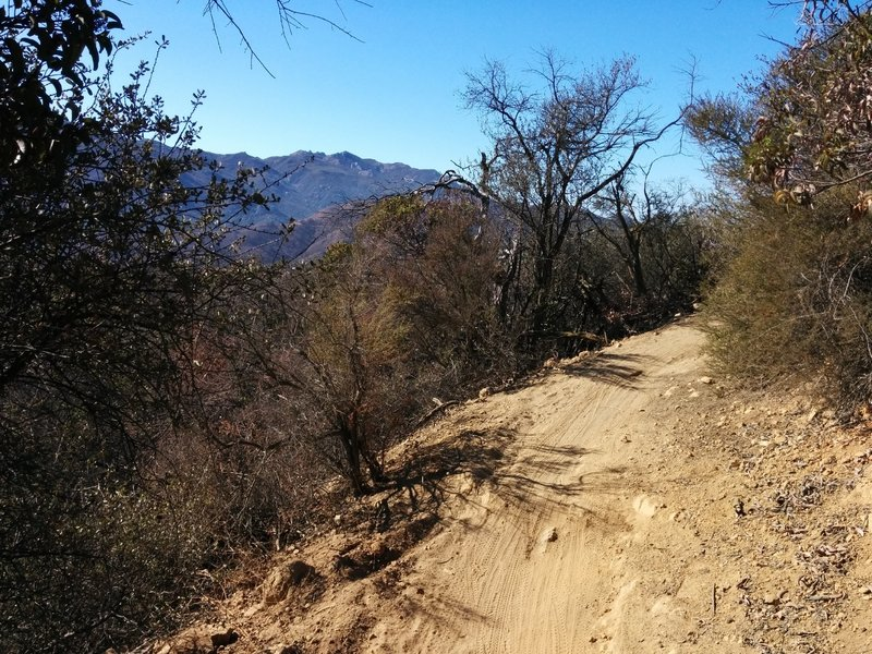 Sandstone Peak as seen from Los Robles Trail West.