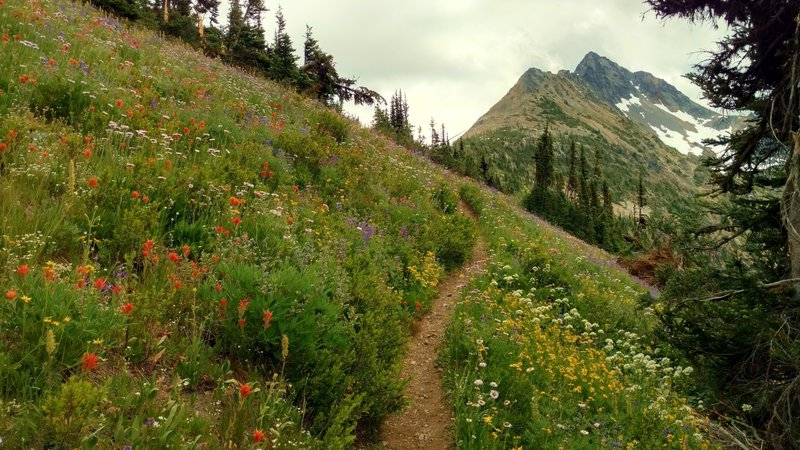 With wildflowers and views like this, switchbacks are fun going to Easy Pass on the Fisher Creek Trail