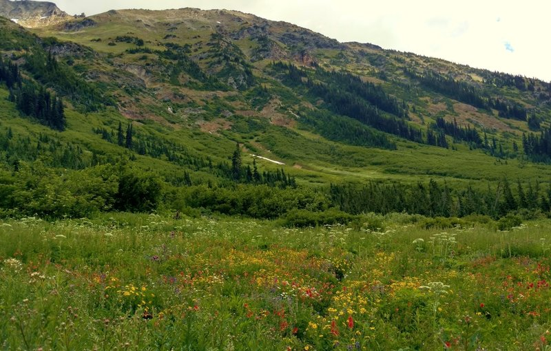 Fisher Creek Trail is thigh deep in wildflowers in this sub-alpine meadow