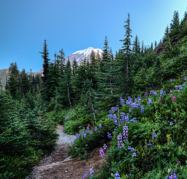You catch a glimpse of Mt. Rainier from the Tolmie Peak Trail as it goes by Eunice Lake
