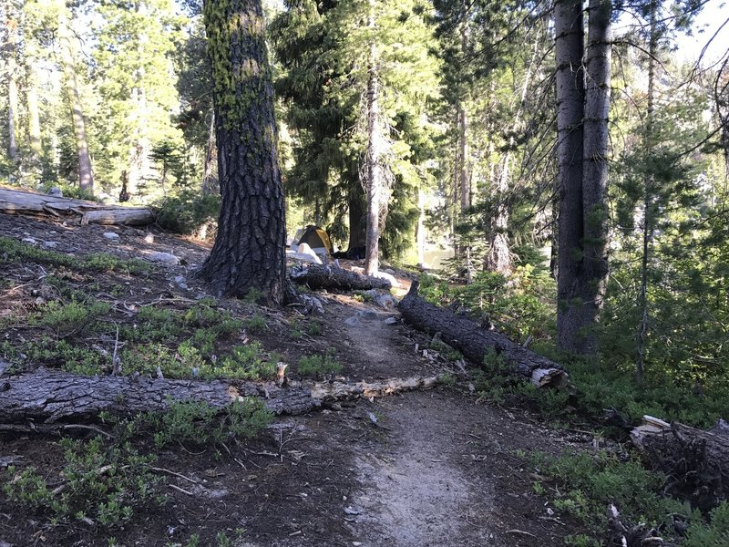 Trail to campsite near outlet on Paynes Lake in Russian Wilderness