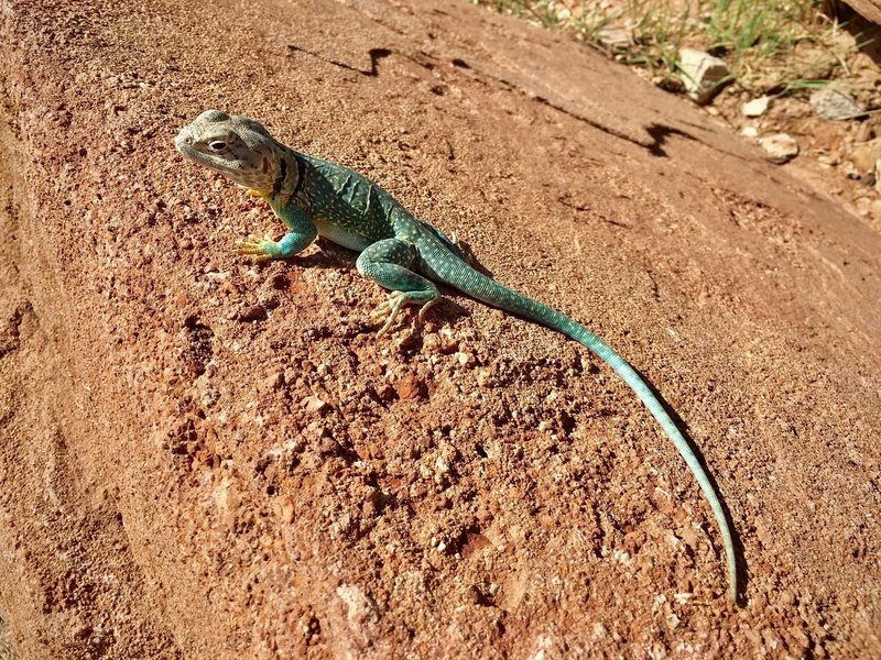 One of the many lizards that may be encountered in the area. This one was particularly stoic, allowing us to get very close for photos.