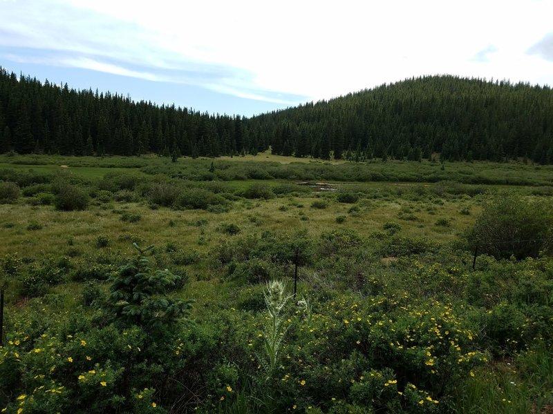 Deer Park off FSR 379