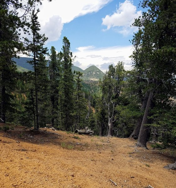 View of Mount Rosa from FSR 379.