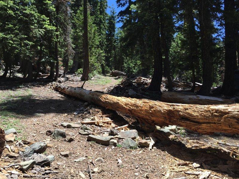 Intersection of Black Rock Lake Trail at Pettyjohn Trail.
