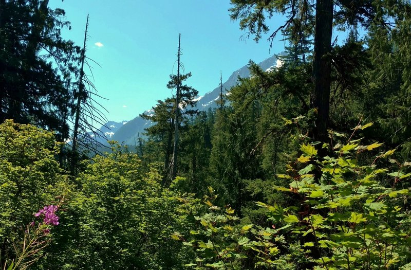 Glimpses of the snow capped mountains ahead, as one heads up Thunder Creek Trail in July