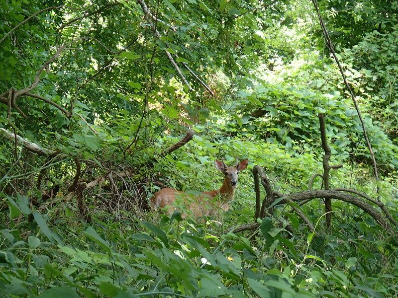 Wildlife along the Denning Loop Trail