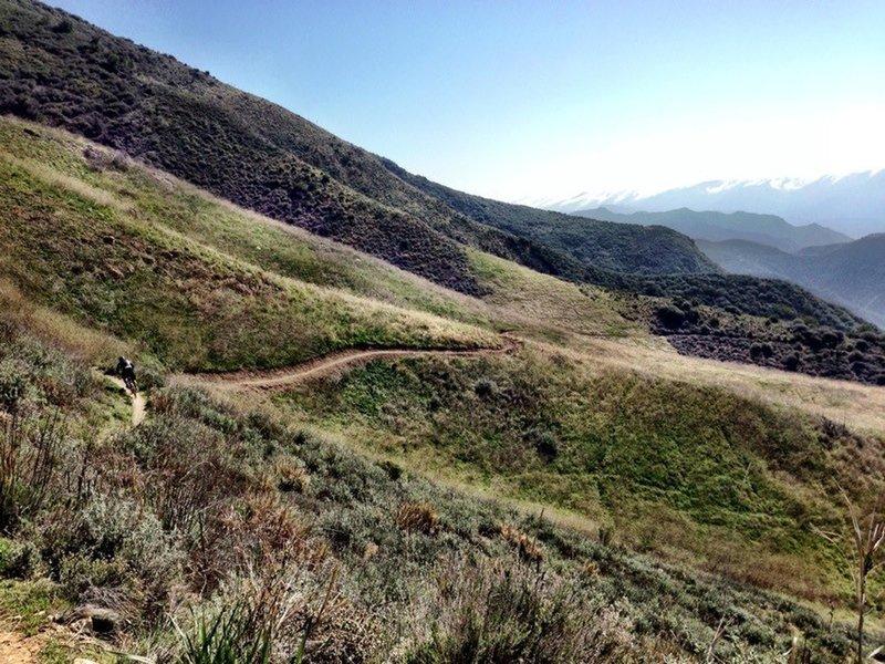 Santa Cruz Trail meadow.
