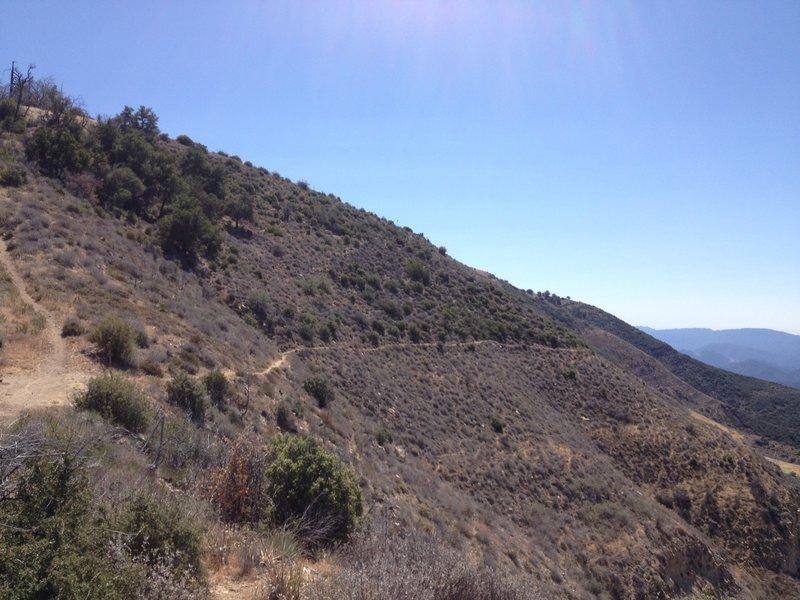 The Santa Cruz Trail at Alexander Saddle.