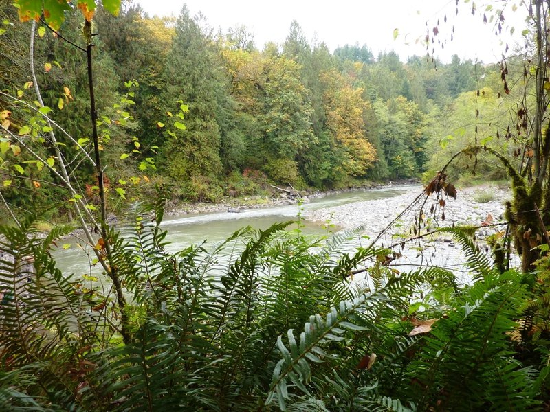 The lower Sandy River Trail is awesome in the fall with the trees turning and the salmon spawning!