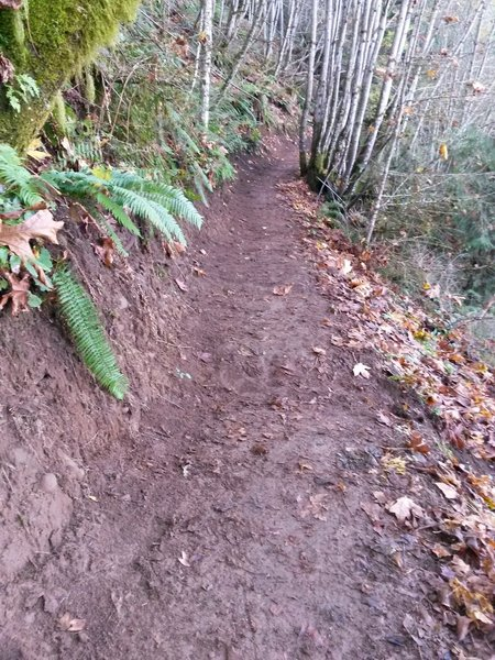 The Jim Slagle Sloop Trail was built in 2015.
