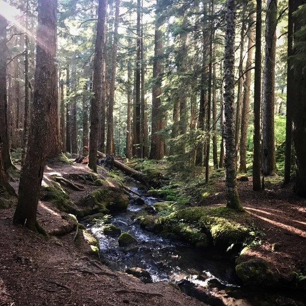 Ramona Falls Trail. Mt Hood National Forest.