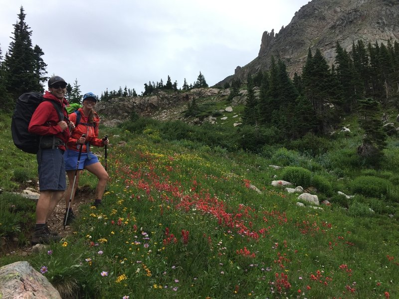 Wildflowers on the Devils Thumb Trail.