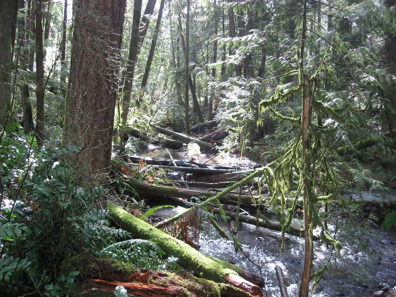 Tickle Creek along Tickle Creek Trail with large woody debris helping support salmon habitat.