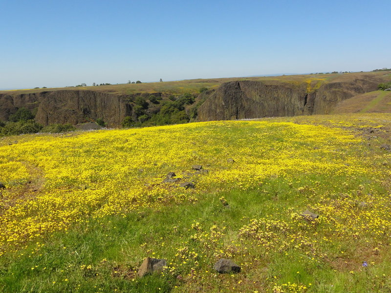 Super wildflower bloom for the Spring of 2016 (at the end of March)