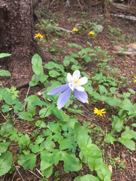 Many wildflowers along the trail.