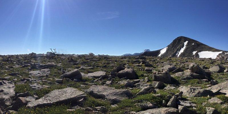 Elk on top of Flattop Mountain on way to Hallett Peak