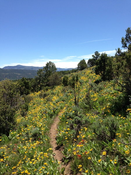 Get here early, and you'll be blown away at beauty that is wildflowers!