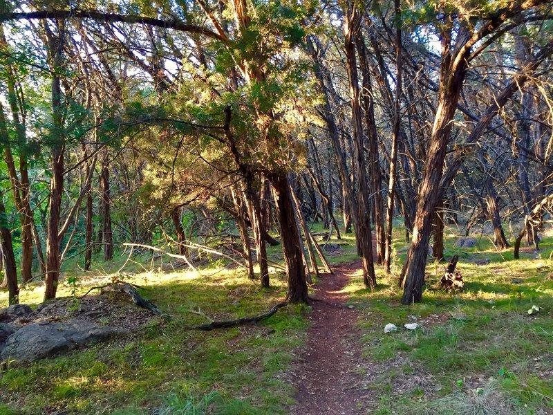 The Hamilton Greenbelt singletrack trail starts off nice and easy.
