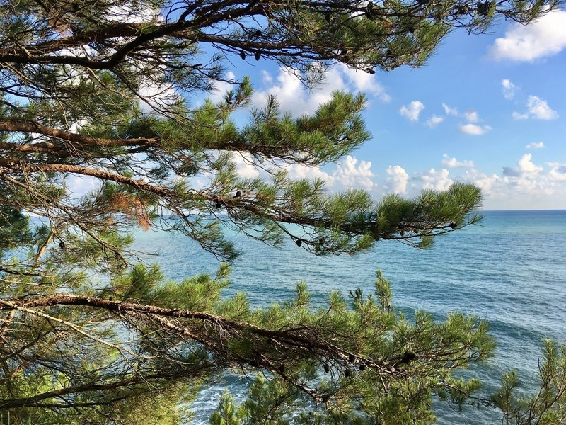 A pine tree and the Black Sea.
