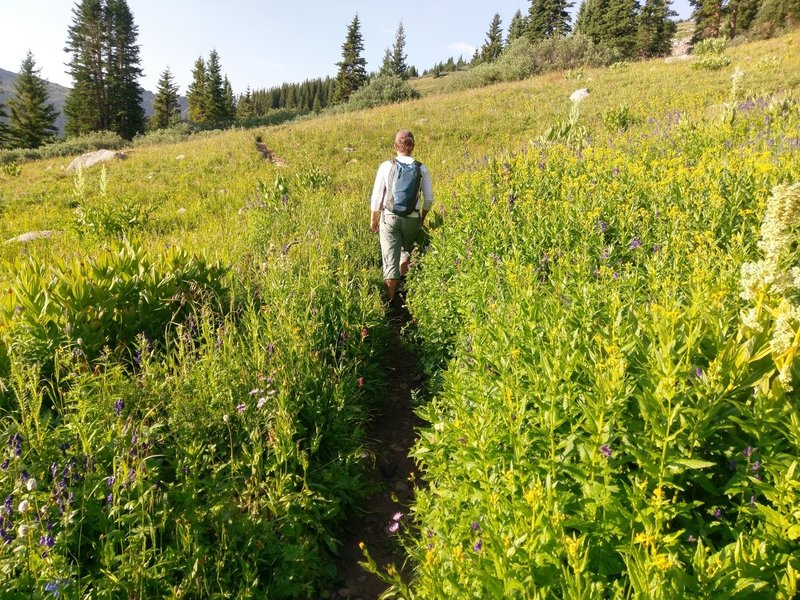 If you like large meadows, full to bursting with wildflowers, this is your trail