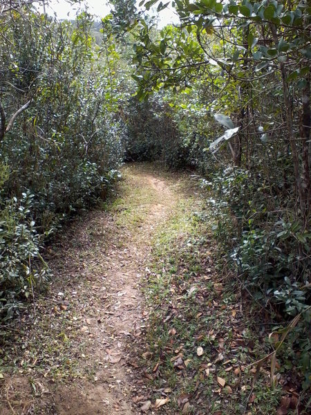 The Custodio Lake Trail