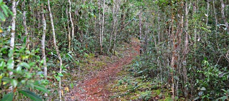 The chapel trail.