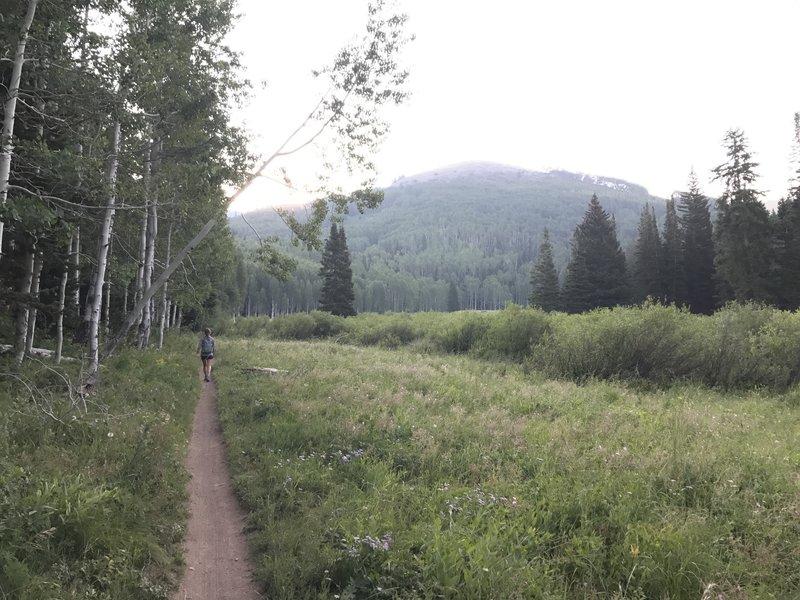 Singletrack Desolation Trail winds through aspens, evergreens, and grassy meadows