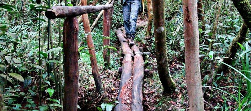 The Forno Trail
