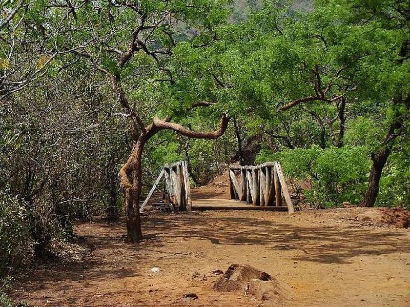 Some of the Mangabeiras Park paths
