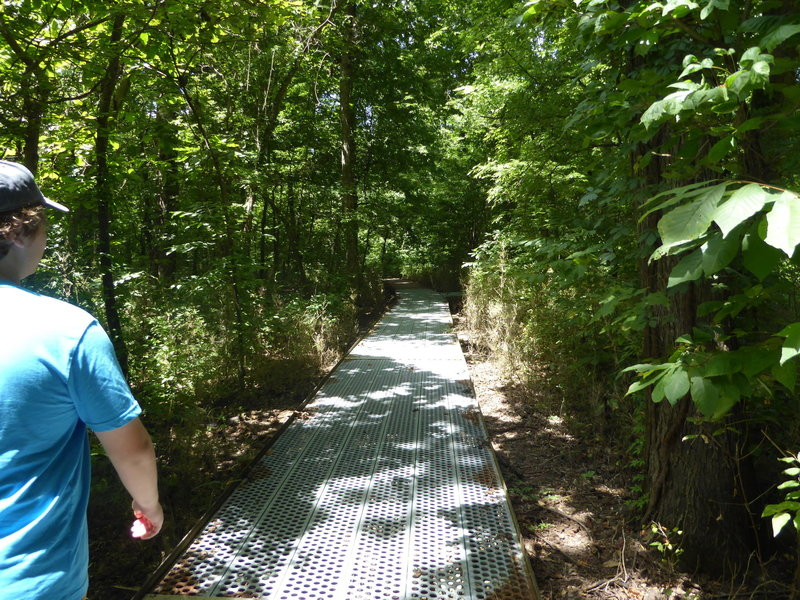 Traversing the metal boardwalk above the wetland of Big Oak Tree State Park.