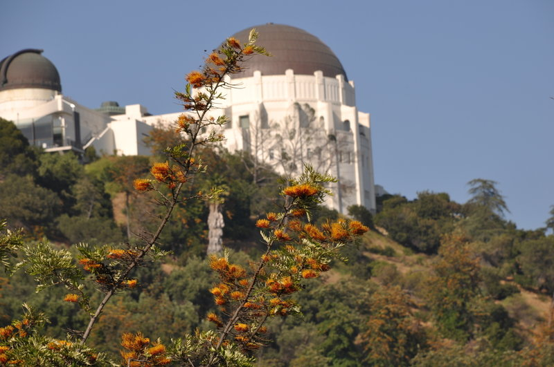 Interesting blooms and the Griffith Park Observatory