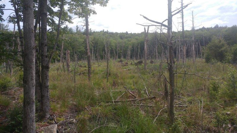 Swamp along Wantastiquet-Monadnock Greenway - Keene Connector