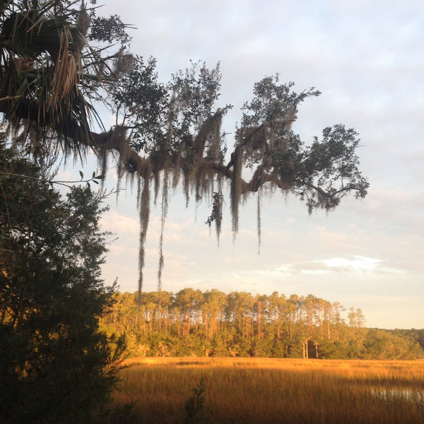 Looking west at sunrise across through the spanish moss