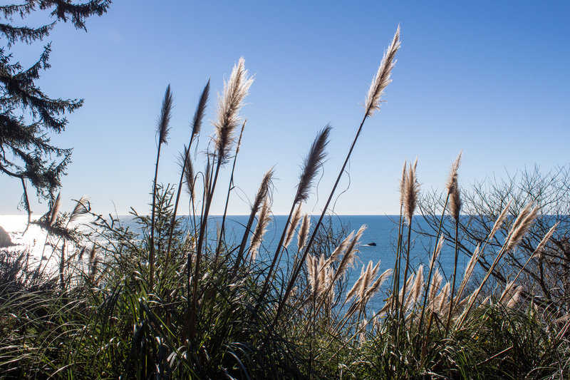 Pacific Ocean through the reeds