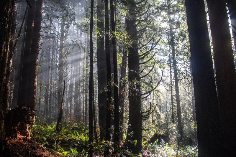 Winter light falling through the trees