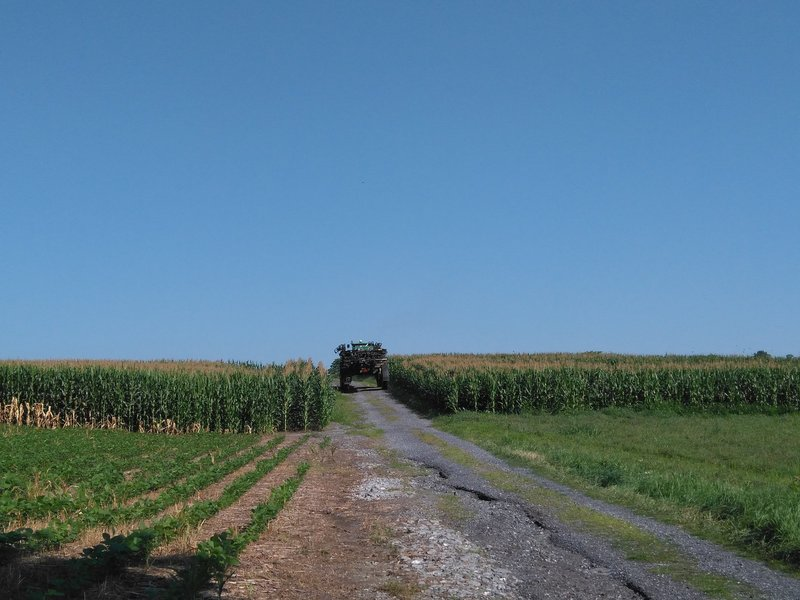 A tractor getting into the corn crops.