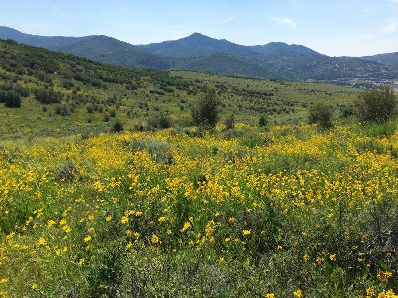 Near bottom, beautiful wildflowers along the entire trail