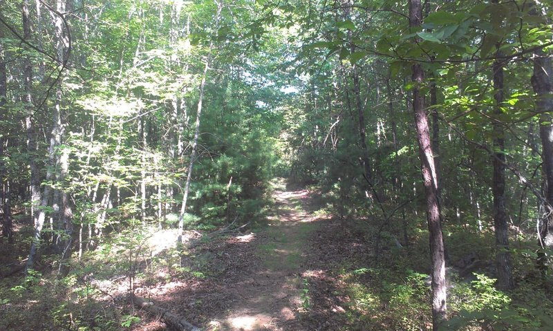 Mixed hardwood/pine forest area