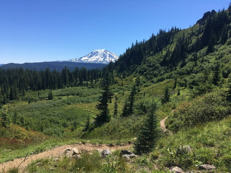 Mt. Adams, looking east near the junction of Boundary and Juniper Ridge.