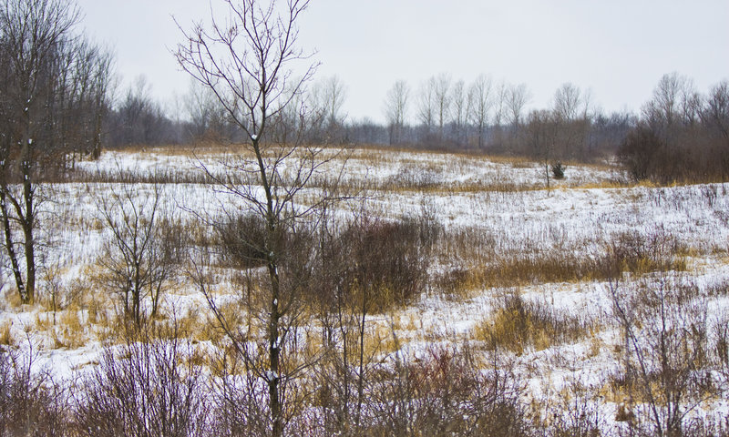 Elm Creek Park Reserve