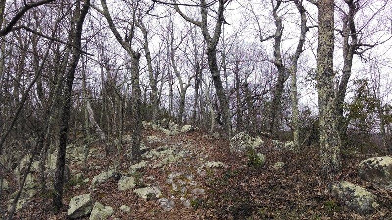 Torry Ridge Trail Rock Garden