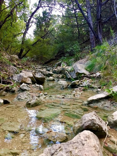 There are a few nice creeks to check out along this trail...just don't drink the creek water ;).