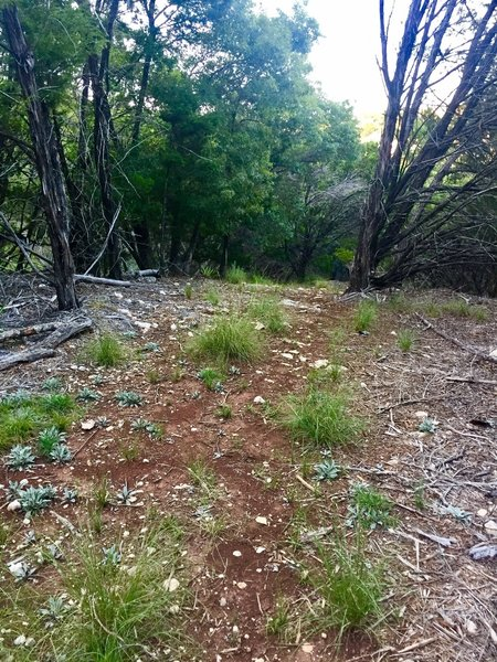This is a typical path section on this trail.... there is some dead fall and 'needs work' sections...but mostly very easy to follow.