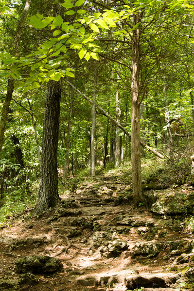 A rocky portion of the Lime Kiln Trail where the elevation changes.