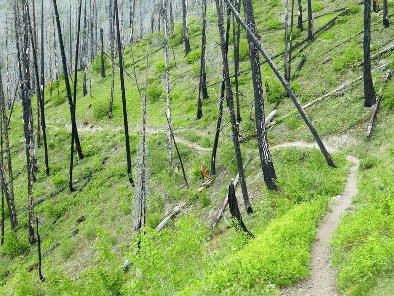 An eerie burn zone on the Warm Springs Trail.